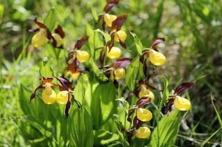 viele orchideen