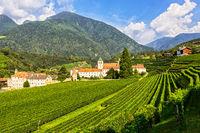Weinberg der Abtei von Novacella, Italien