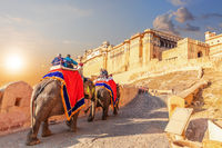 Tourists riding elephants near the famous Amber Fort in Jaipur, India