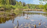 Moorsee am Bündtlisried, Bodanrück im Landkreis Konstanz
