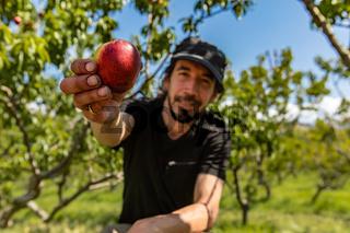 caucasian man shows organic nectarine
