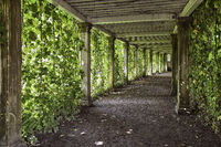 colonnade with the old columns covered with ivy