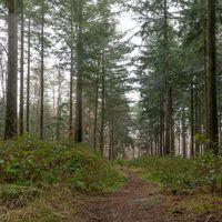 Wald im hellen Nebel mit Kiefern , Laubbäumen und Tannen. Boden bewachsen mit Moos und Farnkraut