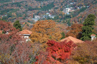 Mountain slopes in the fall. Hakone. Kanagawa. Japan
