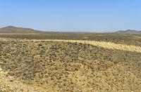 Mit Steinen übersäte Ebene der Danakil-Senke unter dem Meeresspiegel, Afar Region, Äthiopien