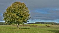 Herbstlandschaft auf dem Heufeld beim Kornbühl, Schwäbische Alb