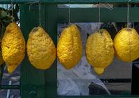 Zitronatzitrone oder Cedrat (Citrus medica)