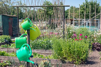 Dutch allotment garden with watering cans , vegetables, bean stakes and sheds