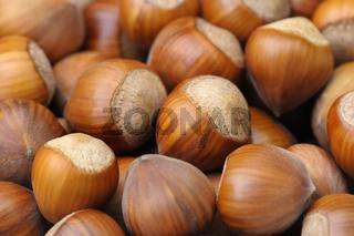 Haselnüsse, Hazelnuts, Germany