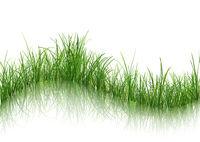 Gras mit Reflexion auf Wasser