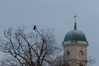 Black crow sitting on tree next to church tower of the church St. Mang in Regensburg on the danube river on cold winter morning in December with fresh snow on the roofs