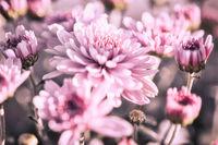 Lila Blumen blühen auf einer Wiese