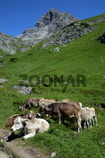 Alpenidylle mit Kuehen und Gebirgsgipfel