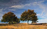 Westruper Heide bei Haltern am See