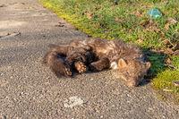 Ein toter Steinmarder liegt am Straßenrand vor Gras und Abfall