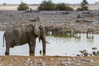 Steppenzebras und Elefant, Wasserloch im Etosha Nationalpark