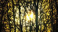 Light through dark winter gloomy forest.