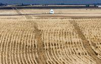 Landscape Saskatchewan Prairie