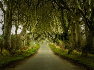 Dark Hedges road through old trees