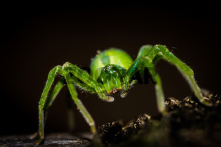 Close up of a spider