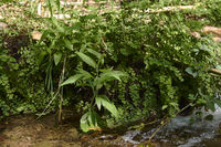 Ferns on the river bank