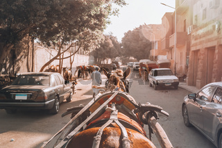 horse chariot in street of Giza Cairo, Egypt