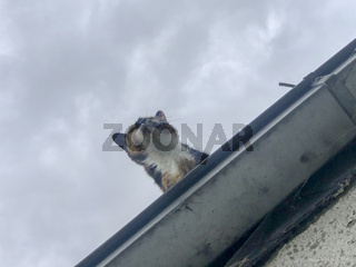 cat on a roof,