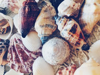 Seashells as summer coastal background, nature and travel