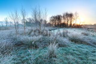 cold frosty sunrise over marsh