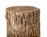 Old stump isolated