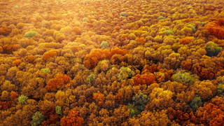 Panoramic view of autumn bright forest in an yellow and red colors.