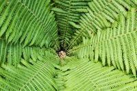 Large fern leaves around the center