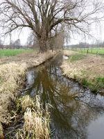 Wipperau, Nebenfluss der Ilmenau