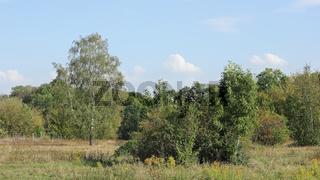 Herbstliche Heidelandschaft mit Birke