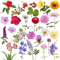 Set of different flowers isolated on white background