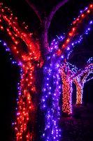 Rote und blaue Lichterketten an einem Baum