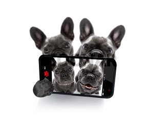 couple of dogs selfie