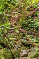 primary rainforest jungle Madagascar