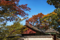 Autumn fall foliage in Jongmyo Shrine