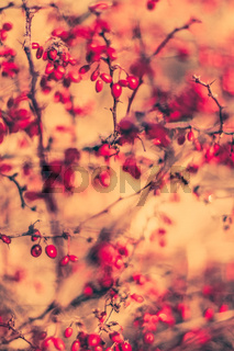 Vintage autumn abstract background, nature fine art