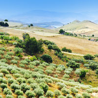 Misty Landscape of Sicily