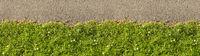 Grüne Gras Linie als Abgrenzung von oben als Header