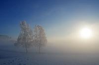 Winterliche Morgenstimmung mit Birken