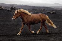 IS_Pferd_14.tif