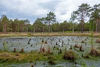 Landschaft im Naturschutzgebiet Großes und Weißes Moor, Landkreis Rotenburg, Niedersachsen, Deutschland