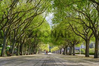 Lisbon Portugal city skyline of tree tunnel at Eduardo VII Park