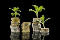 Pflanzen wachsen aus gestapelten Geld Münzen vor schwarzem Hintergrund mit Spiegelung