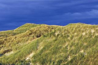 Sandduenen im ersten Morgenlicht an der Daenischen Nordseekueste
