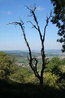 Alter Baum bei Löwenstein