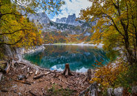 Tree stumps after deforestation near Hinterer Gosausee lake, Upper Austria. Autumn Alps mountain lake with reflections. Dachstein summit and glacier in far.